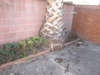 Huntington beach home inspector discusses tree issue